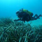 Plongeur Posidonies