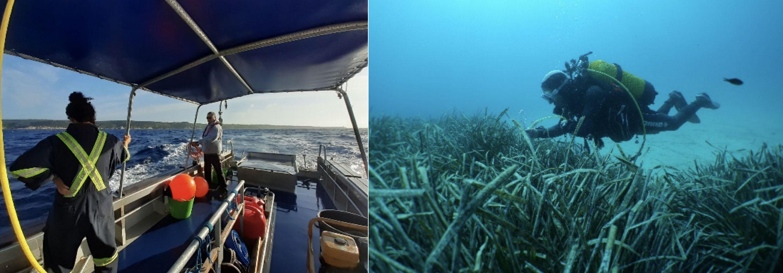 Les premières études en milieu marin ont été réalisées au mois de juin
